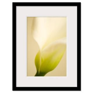Calla Lily Framed Prints  Calla Lily Framed Posters