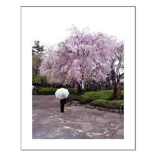 Cherry Blossoms Umbrella  Cherry Blossoms Umbrella