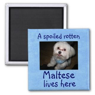 Spoiled Rotten Pet Lives Here Magnet Boy
