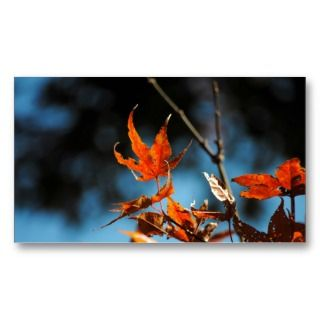 Japanese Maple Tree Leaves Photo Business Cards