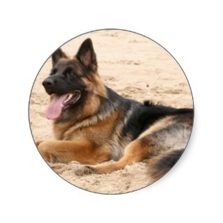 Resting German Shepherd Dog Sticker