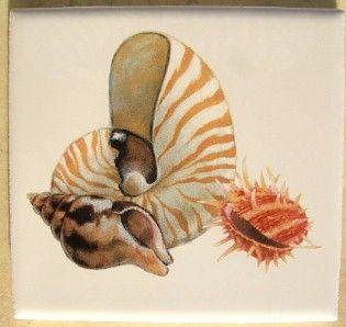 Seashell Ceramic Tile w Sea Shell 1 Seashells Pretty