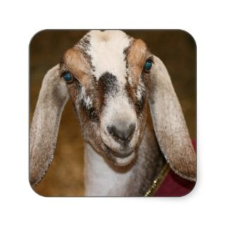Nubian Dairy Goat Doe White Stripe Caprine Stickers