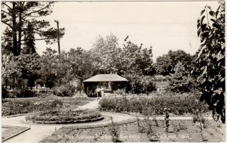 Real Photo Postcard of Luther Burbank Gardens in Santa Rosa California