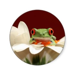 red eyed tree frog sticker