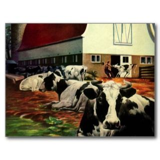 Vintage Business, Dairy Farm w Holstein Milk Cows Post Cards