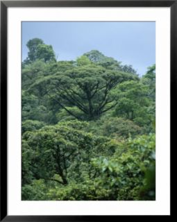 Rain Forest, Costa Rica Pre made Frame
