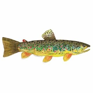 Trout Fly Fishing Acrylic Cut Out