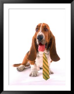Dog with dress tie Pre made Frame