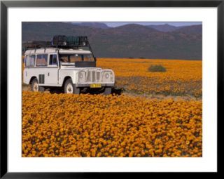 4X4 in Meadow of Daisies, South Africa Pre made Frame