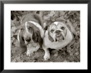 Two dogs looking up Pre made Frame