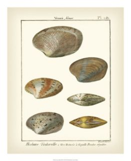 Venus Shells, Pl.281 Print by Denis Diderot