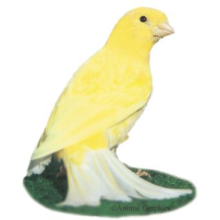 Yellow Canary   Bird   Live Pet