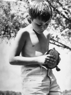 Child Prodigy Gerard Darrow Playing with His Pet Turtle Premium Photographic Print by William C. Shrout
