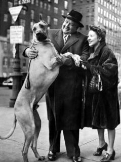 Metropolitan Operas Helden Tenor Lauritz Melchior with Wife, Petting His Great Dane Dog on Street Premium Photographic Print by Nina Leen