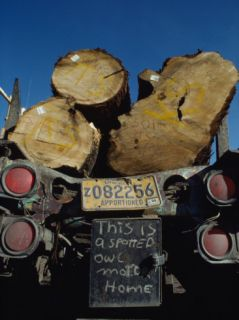 Cedar Logs Ride to a Coos Bay Mill on a Truck Photographic Print by James P. Blair