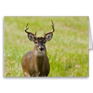 Merry Christmas Happy New Year Whitetail Buck Greeting Card
