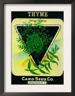 Thyme Seed Packet Posters
