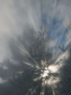 Sunlight Streams Through Steam in Evergreen Trees Photographic Print by Tom Murphy