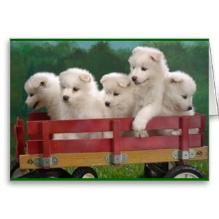 Samoyed Puppies Card