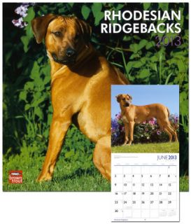 Rhodesian Ridgebacks   2013 Wall Calendar Calendars