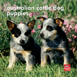 Australian Cattle Dogs   2013 Mini Calendar Calendars