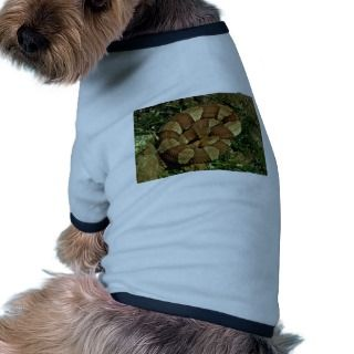 Broad banded copperhead dog clothes