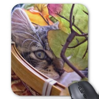 Maine Coon, Kitty Cat Kitten, Fall Colors, Flowers Mouse Pad