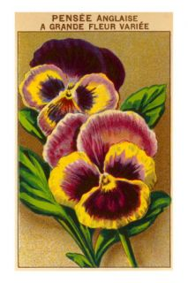French Pansy Seed Packet Posters