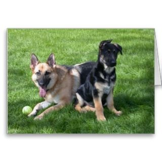 German Shepherd Dogs   Blank inside Greeting Card