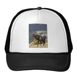 Rocky Mountain Bull Elk Bugling Hat