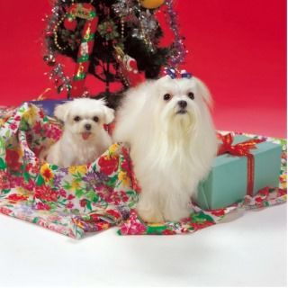 Merry Maltese Christmas Ornaments Acrylic Cut Out