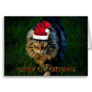 Christmas card xmas Christmas animal kitty cat