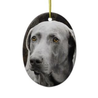 Soulful Eyes of the Weimaraner Christmas Tree Ornament