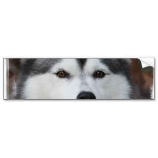 Husky Dog Bumper Sticker