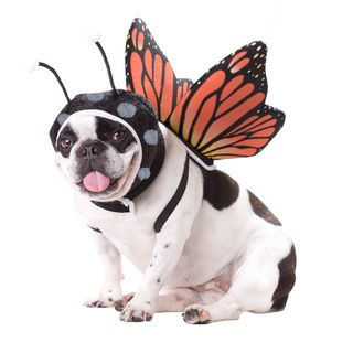 Animal Planet Butterfly Dog Halloween Costume