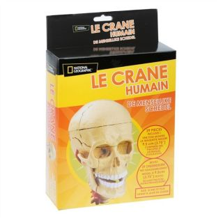 Le crâne Humain National Geographic   Achat / Vente JEU ASSEMBLAGE