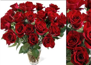 100 Fresh Red Wholesale Roses (18 in. stem length)