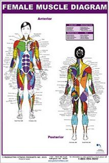 Female Muscle Diagram: Andre Noel Potvin: 9780973941104: