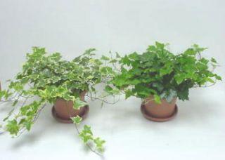 Flowers & Plants Buy Plants, Fresh Flowers, & Potted