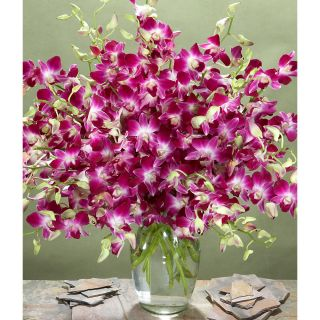 Mothers Day Preorder) Deluxe Purple Dendrobium Orchids with Large